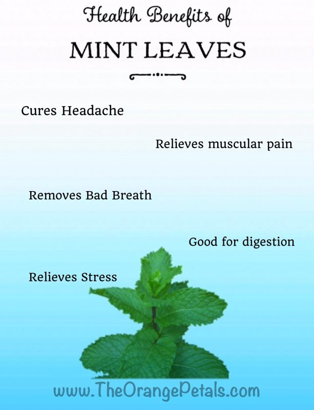 Health Benefits Of Mint Leaves Theorangepetals