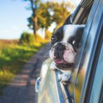 ​5 Tips For Bringing Your Pet On A Family Road Trip